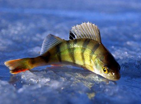 Условия зимней рыбалки на 2013-2014 год