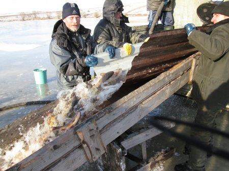Январское зарыбление пруда в Степановке