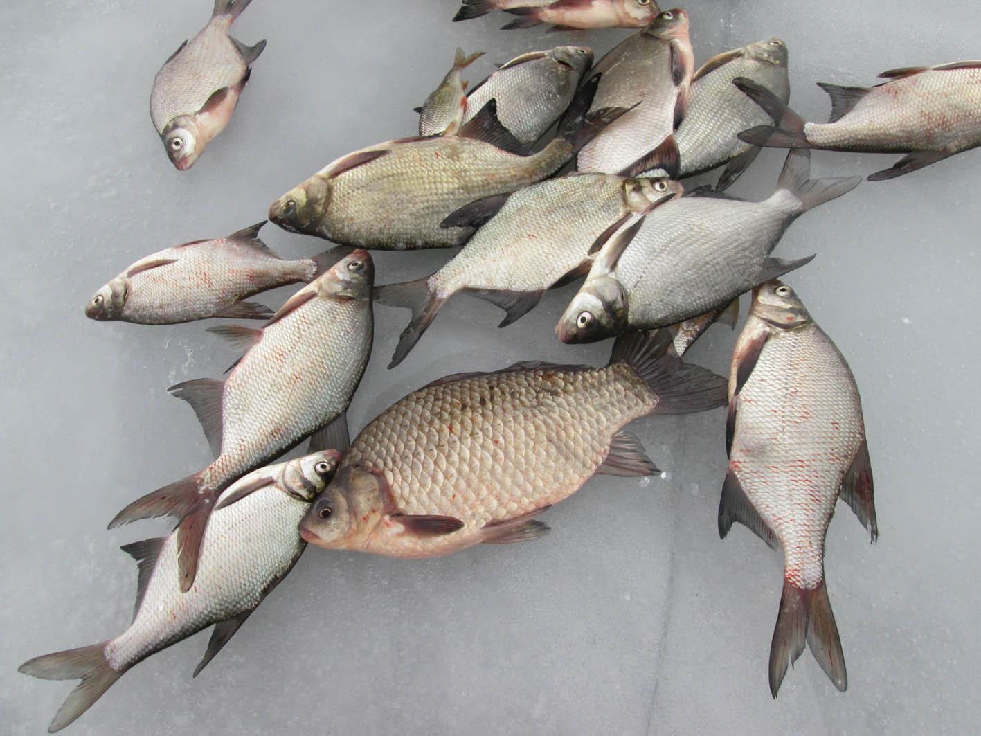 отчеты о рыбалке в подмосковье 2016 апрель 2016